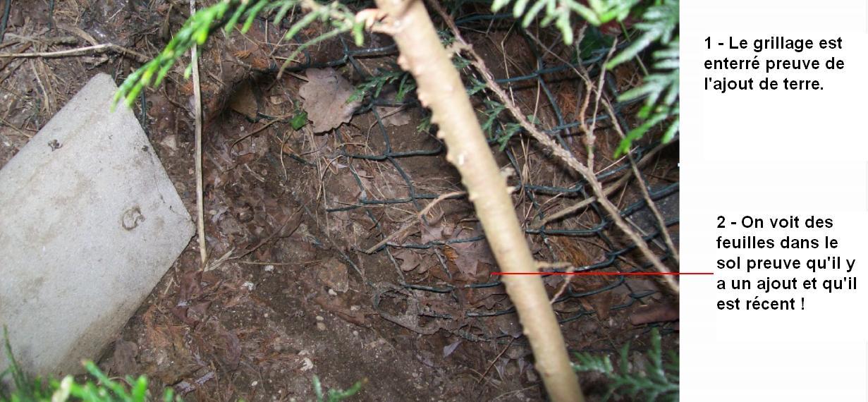 Le grillage selon ALLIANZ et ses experts est enterré et c'est normal, les feuilles dans la terre sont arrivées aussi sans ajout de terre ?